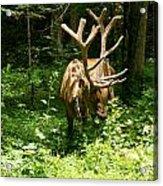 Elk Profile   Acrylic Print by Glenn Lawrence