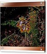 Elwha Leaf Acrylic Print