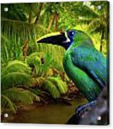 Emerald And Blue Toucan  Acrylic Print