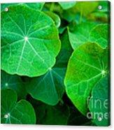 Emerald Acrylic Print
