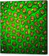 Emerald Coral Acrylic Print