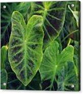 Emerald Leaves Acrylic Print