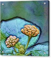 Emerald Stamped Floret Acrylic Print