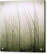 Emerson Bog At Dawn Acrylic Print