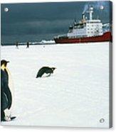 Emperor Penguins On Sea-ice, Antarctica Acrylic Print