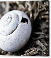 Empty Snail Shell Acrylic Print