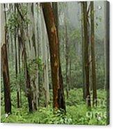 Australia Enchanted Forest Acrylic Print