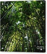 Enchanted Forest Haleakala National Park Acrylic Print