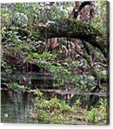 Enchanted Forrest IIi Acrylic Print