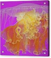 Enchanted Jellyfish 2 Acrylic Print