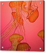 Enchanted Jellyfish 3 Acrylic Print