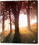 Enchanted Meadow Acrylic Print
