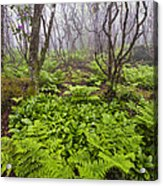 Enchanted Woodland Forest In Fog Blue Ridge Parkway In North Carolina Acrylic Print