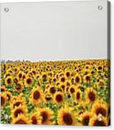 Endless Field Of Dreams Acrylic Print
