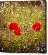 English Summer Meadow. Acrylic Print