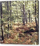 English Woods And Autumn Ferns Acrylic Print