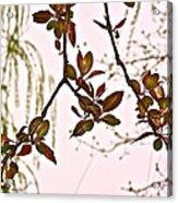 Entanglement II Acrylic Print by Rotaunja