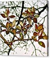 Entanglement Acrylic Print by Rotaunja