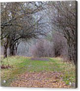 Enter The Mystery Forest Acrylic Print