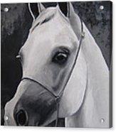 Equestrian Silver Acrylic Print