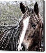 Equine Trance Acrylic Print