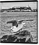 Escape From Alcatraz Acrylic Print