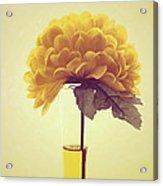 Estillo - S03-y01r Acrylic Print