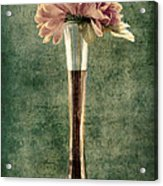 Estillo Vase - S02et01 Acrylic Print by Variance Collections