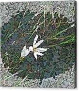 Estuary Bloom Acrylic Print