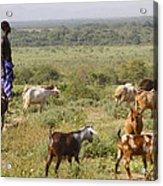 Ethiopia-south Tribal Goat Herder Acrylic Print