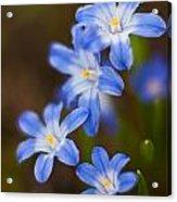 Etoiles Bleus Acrylic Print