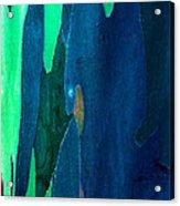 Eucalyptus Tree Trunk Acrylic Print