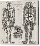 Evelyn Table Blood Vessels, 17th Century Acrylic Print