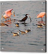 Evening Activity In The Bay Acrylic Print