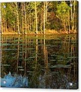 Evening Light On A Missouri Pond I Acrylic Print