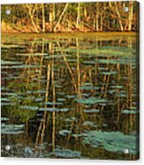 Evening Light On Missouri Pond 2 Acrylic Print
