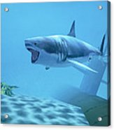 Example Of Reality Centre Graphics, Shark Acrylic Print