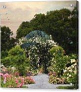 Exhibit Of Roses Acrylic Print