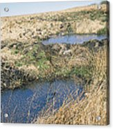 Exmoor Blanket Bog Acrylic Print