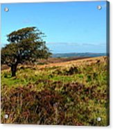 Exmoor's Heather-covered Hills Acrylic Print