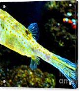 Exotic Fish Acrylic Print