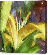 Exotic Lily In Oil Acrylic Print