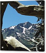 Exposed Roots Framing Mountains Acrylic Print