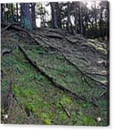 Exposed Roots Acrylic Print