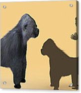 Extinct Giant Gorilla Acrylic Print