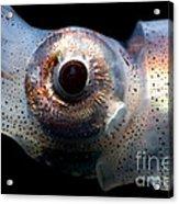 Eye Flash Squid Acrylic Print