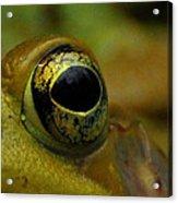 Eye Of Frog Acrylic Print