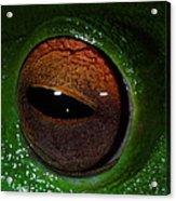 Eye Of The Frog Acrylic Print