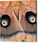 Eyes Of Deception Acrylic Print by Peg Urban