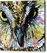 Eyes Of Owl's 13 Acrylic Print